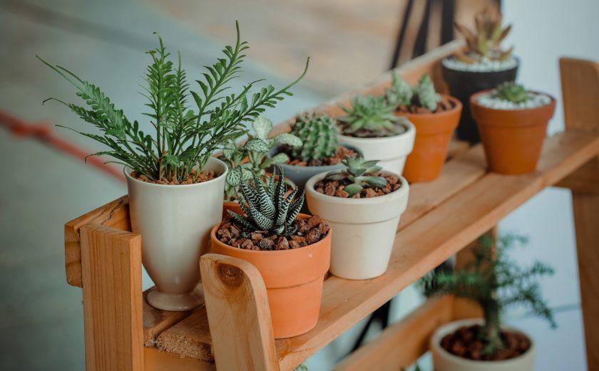 5 kamerplanten