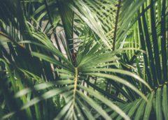 Een zomerse tuin met behulp van tropische planten