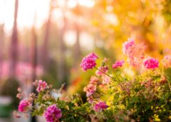 Tips om alle seizoenen van je tuin te genieten